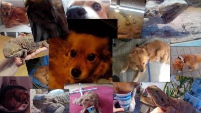 Unsere Tiere